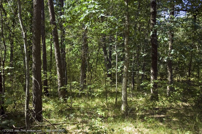 1762249 - Affordable Wooded Country Lot for Sale by Town