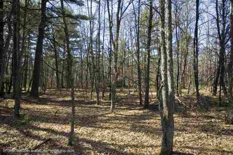 1591999 - Fully Wooded 11 Acres for Sale